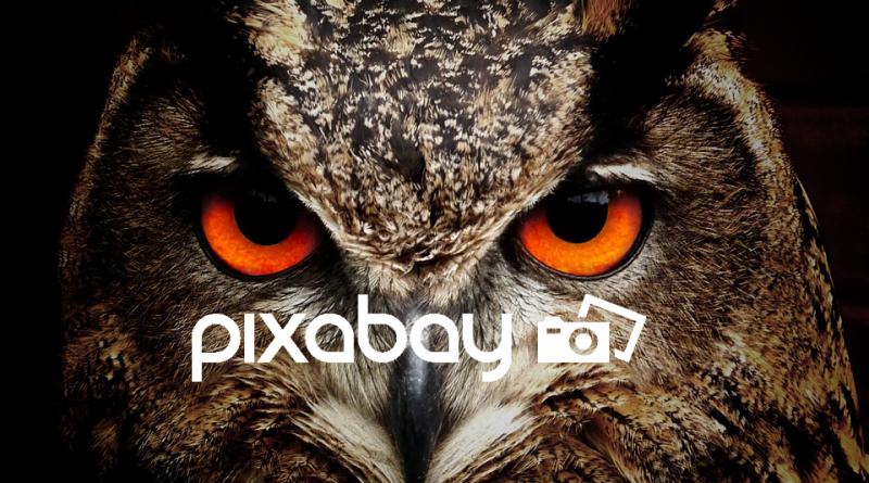 Pixabay: Trang web cho phép tải stock chất lượng cao, miễn phí mọi mục đích
